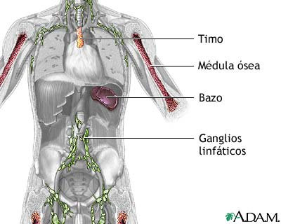 20071216192420-sistema-inmune.jpg